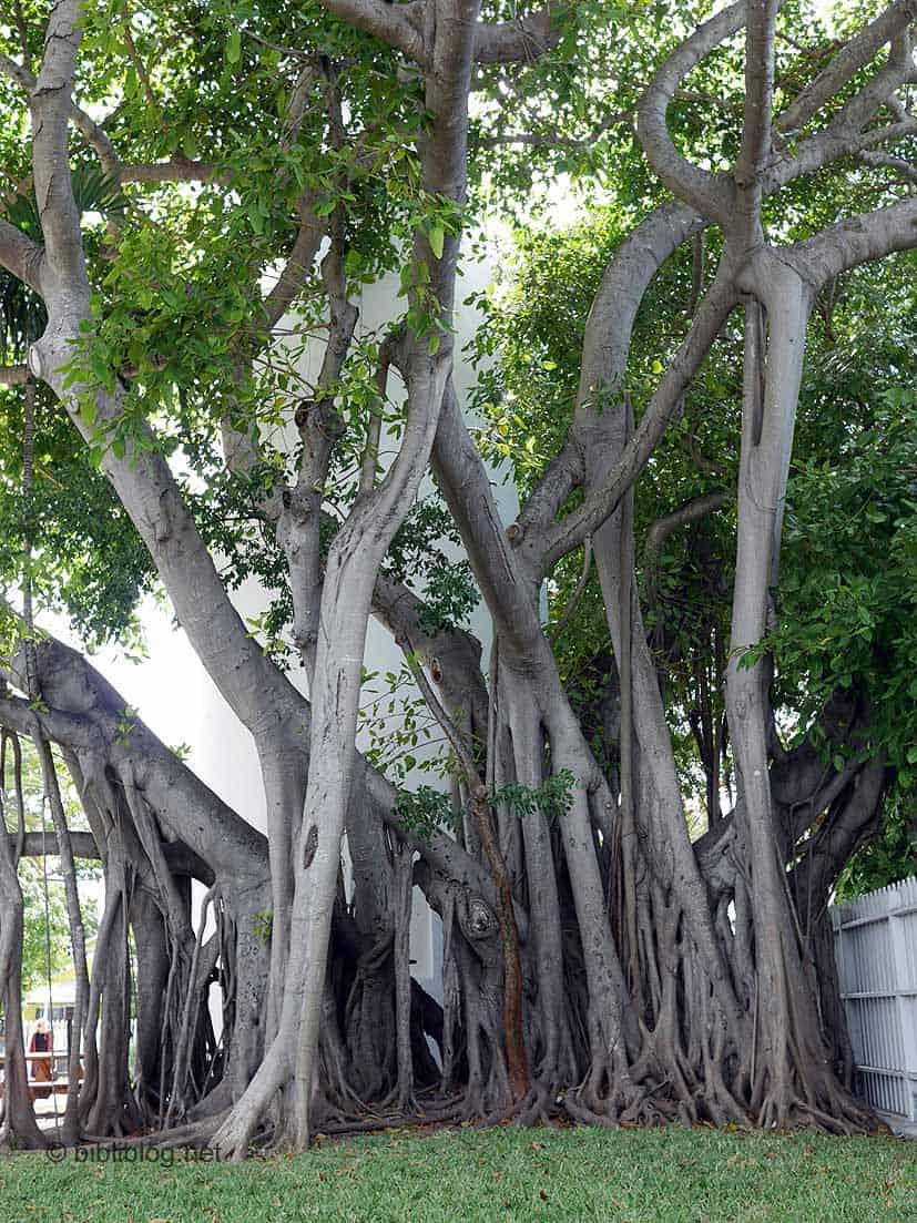 végétation Key West