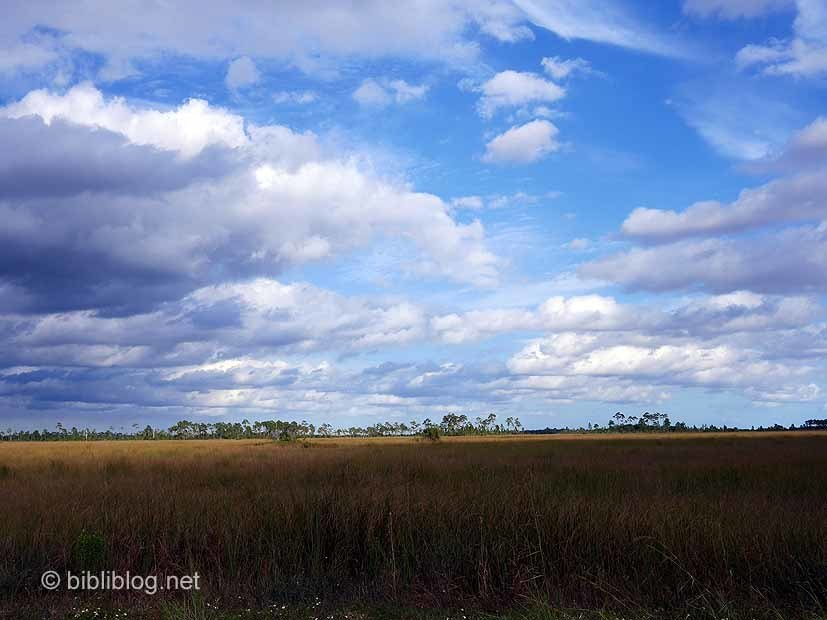 Pa-hay-okee Everglades 3