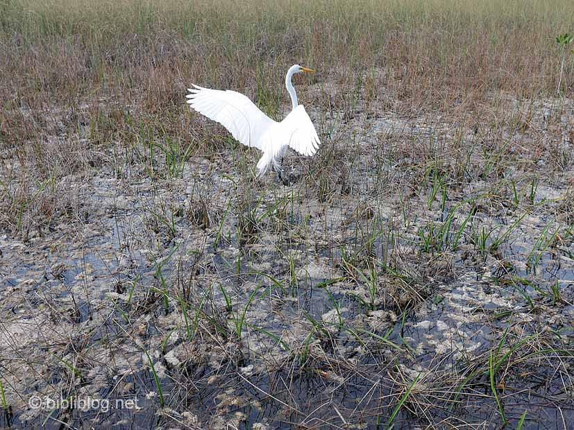 pêche oiseau Everglades