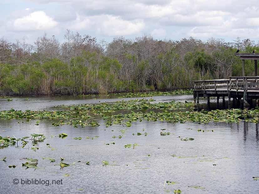 marais Royal Palm Everglades