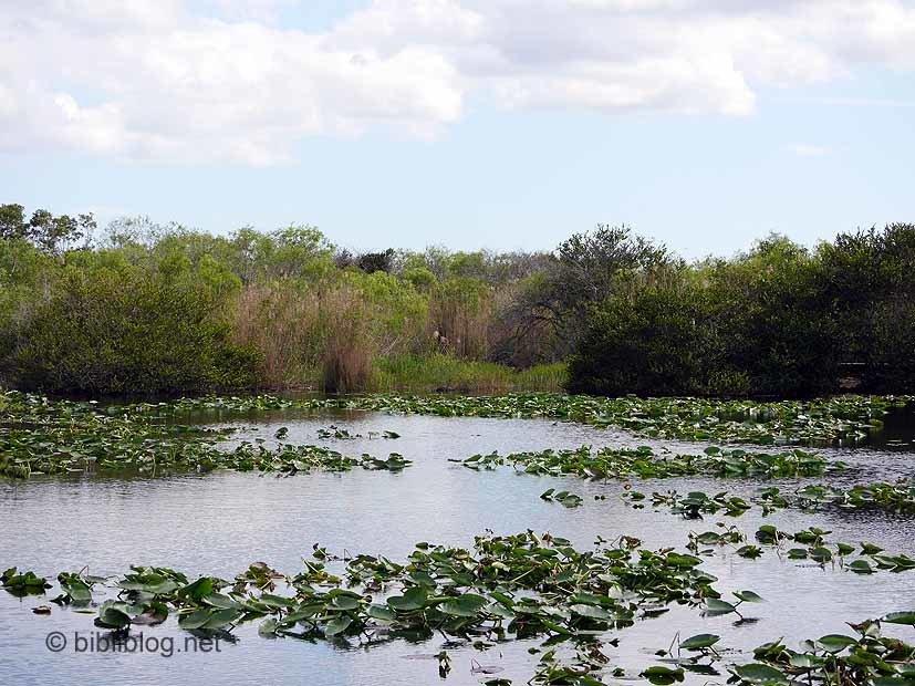 faune flore Royal Palm Everglades