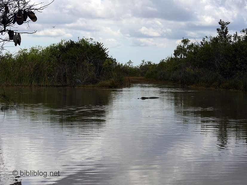 vue Everglades