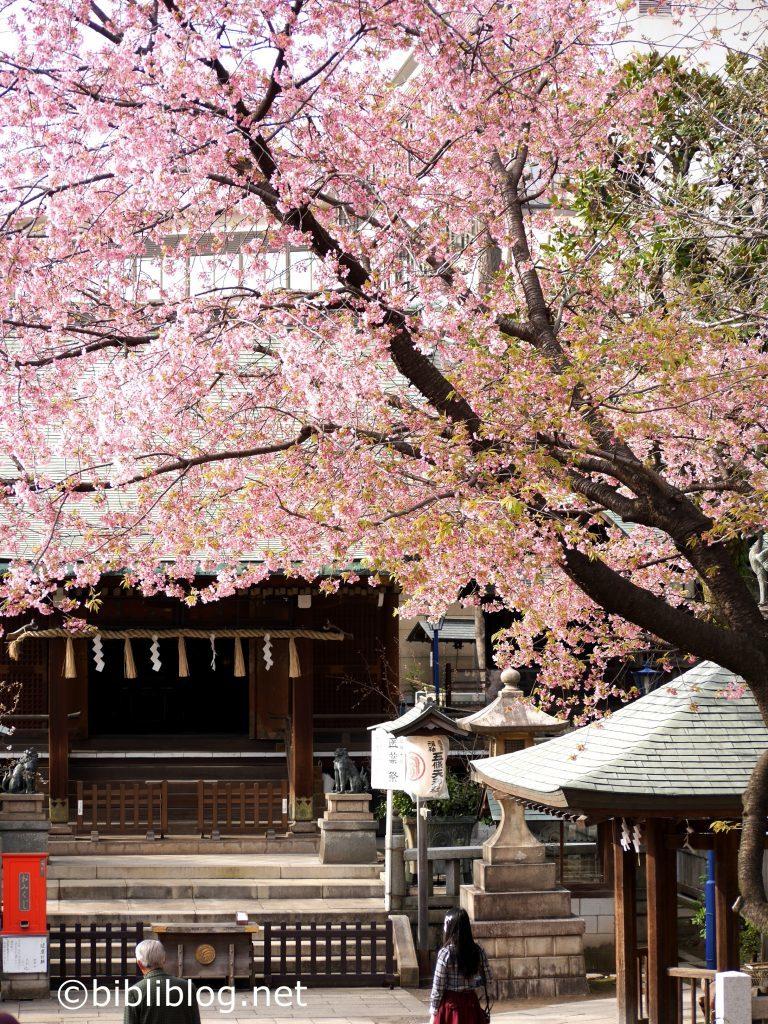sakura-rose-tokyo-ueno