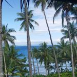palmiers-mindoro-1