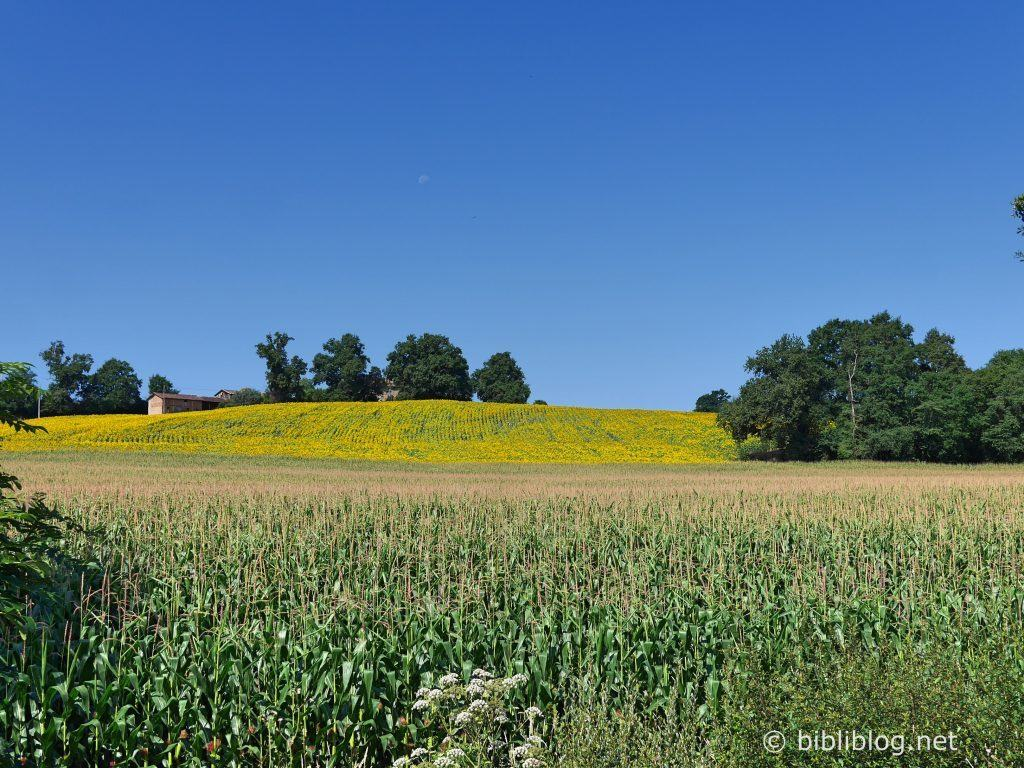 Gers-paysage-Nogaro