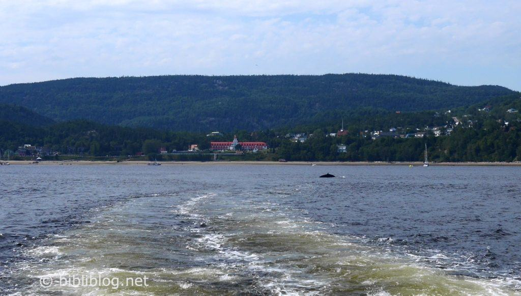 baleine-sillage-tadoussac