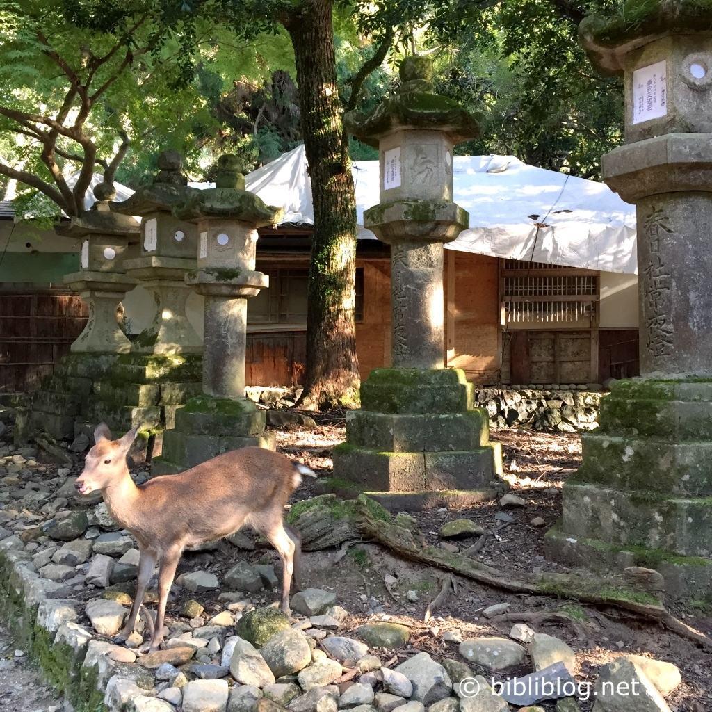 japon-biche-nara