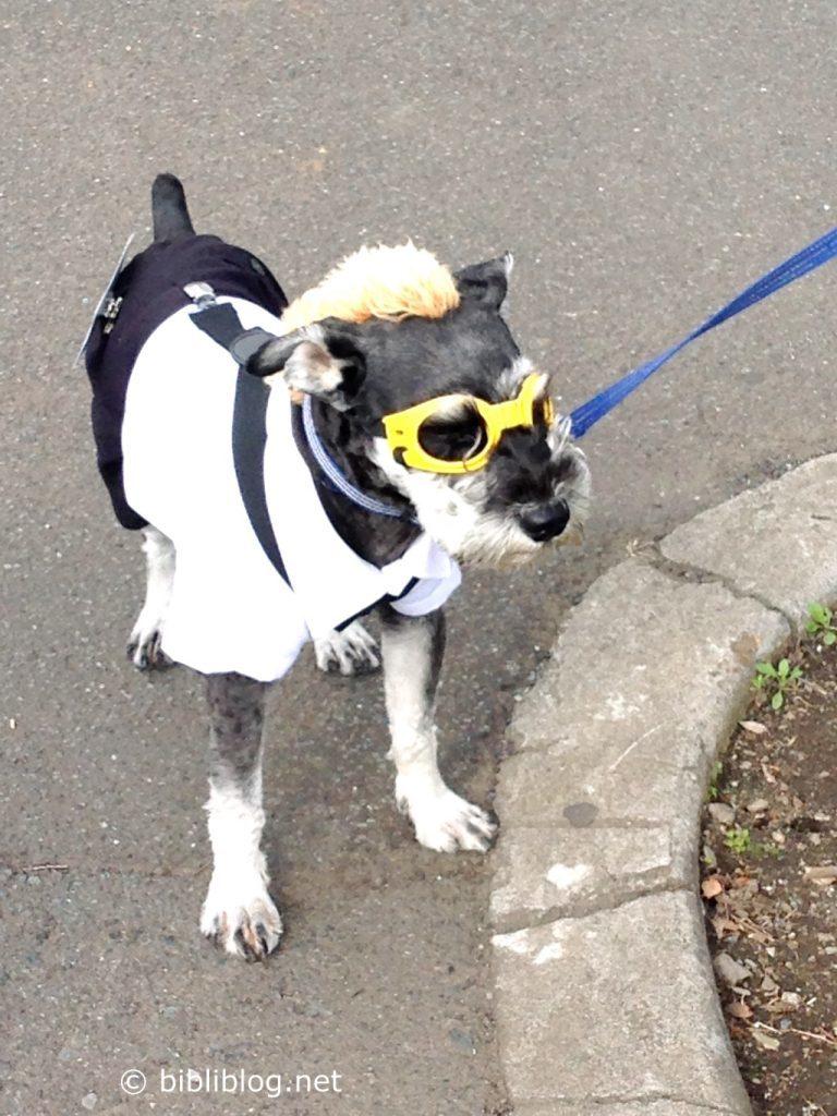 chien-lunettes-japon