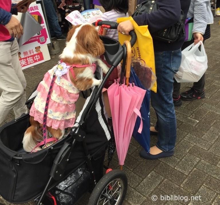 chien-robe-japon