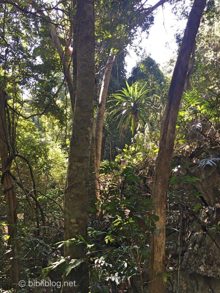 jungle-laos-1