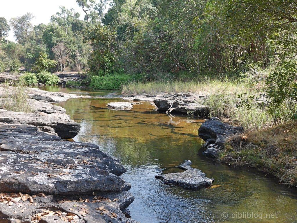 jungle-laos-riviere