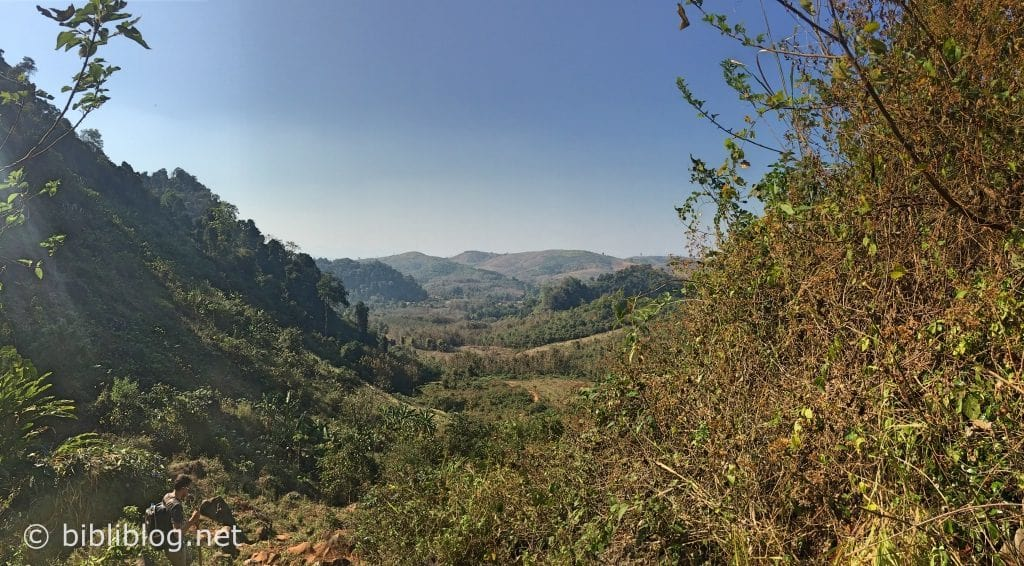 jungle-panorama