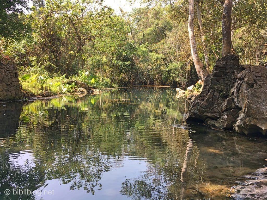 jungle-riviere