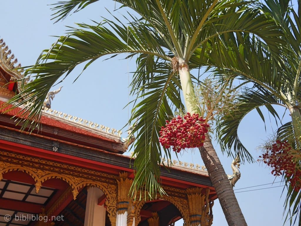 laos-temple-vegetation