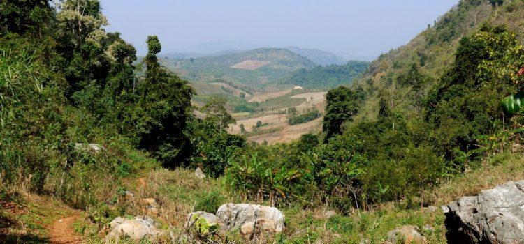 Trekking dans la jungle laotienne