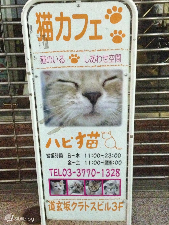 neko-bar Bar à chats au Japon