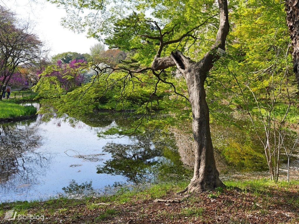 parc botanique Tokyo