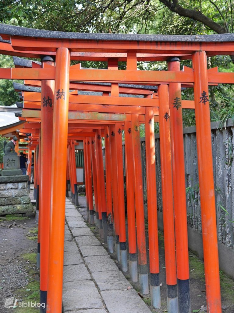 Enfilade de torii au parc Nezu à Tokyo