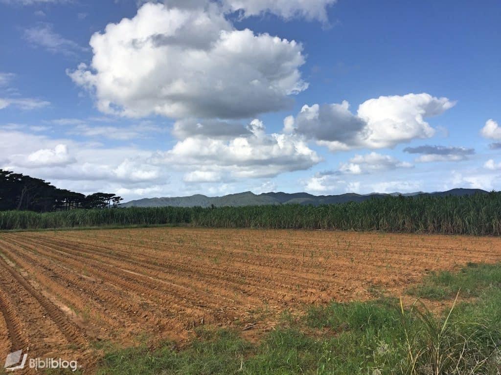 Iriomote-paysage