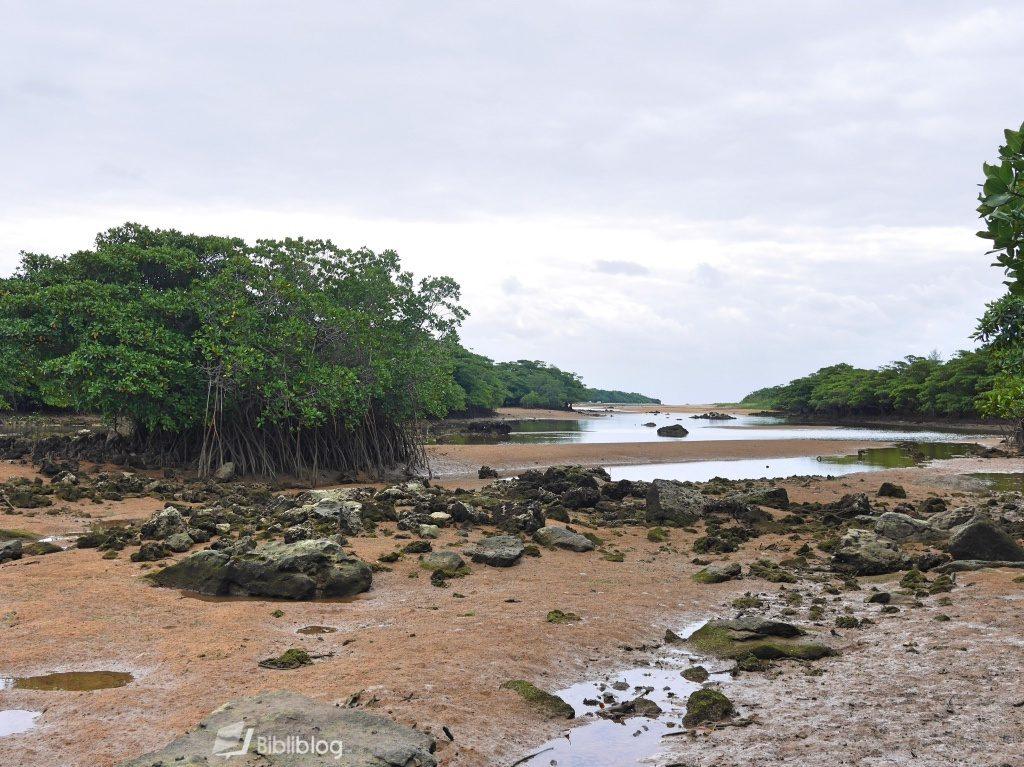 Mangrove Ishigaki Japon