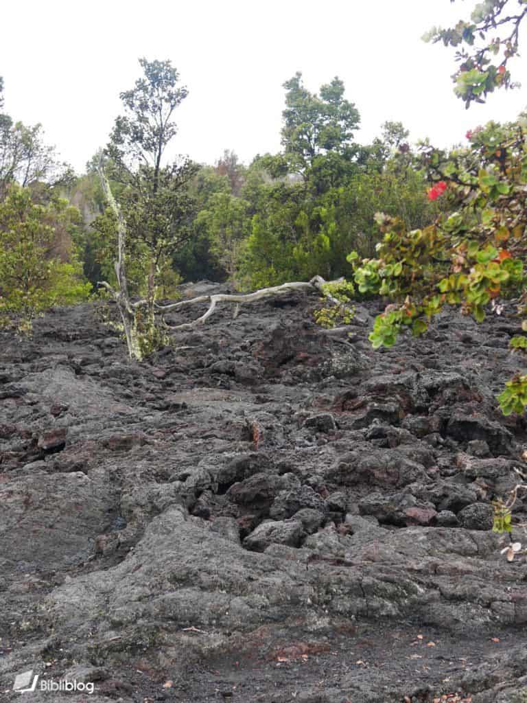 Coulée de lave Hawaii