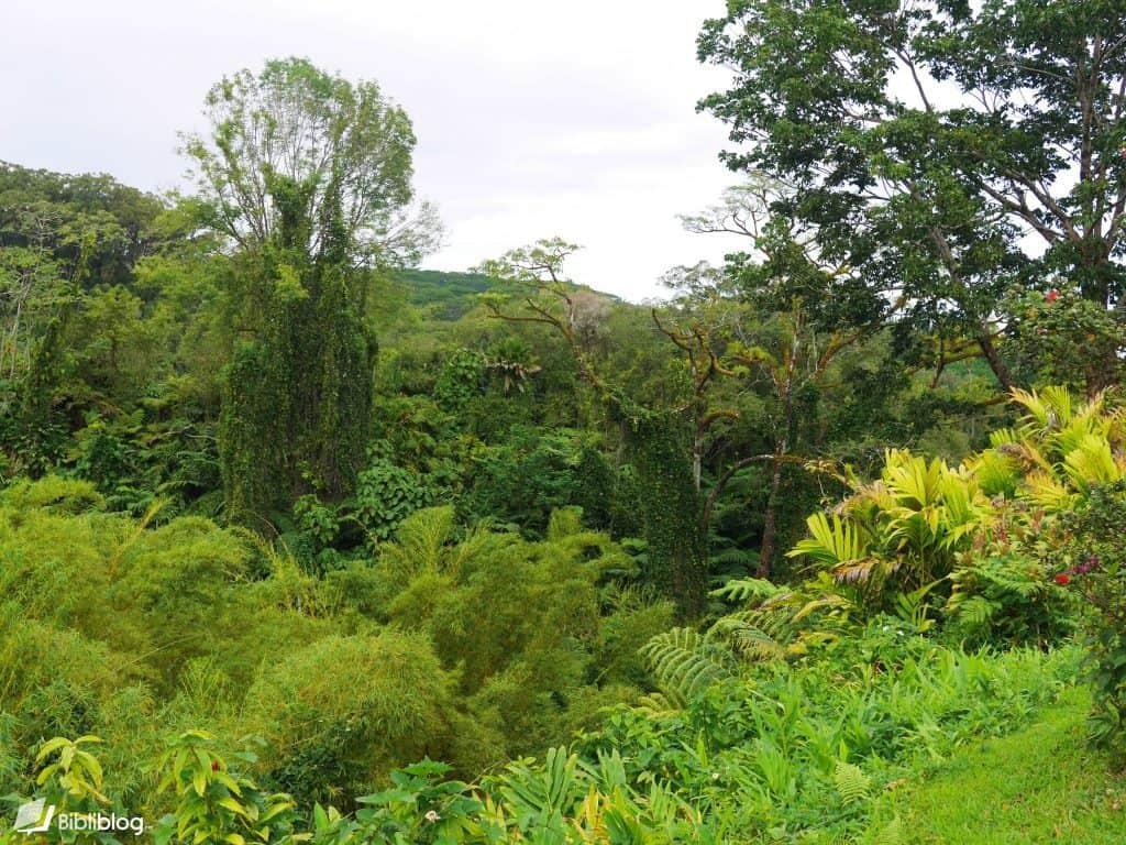 Forêt tropicale sur Big Island, Hawaii