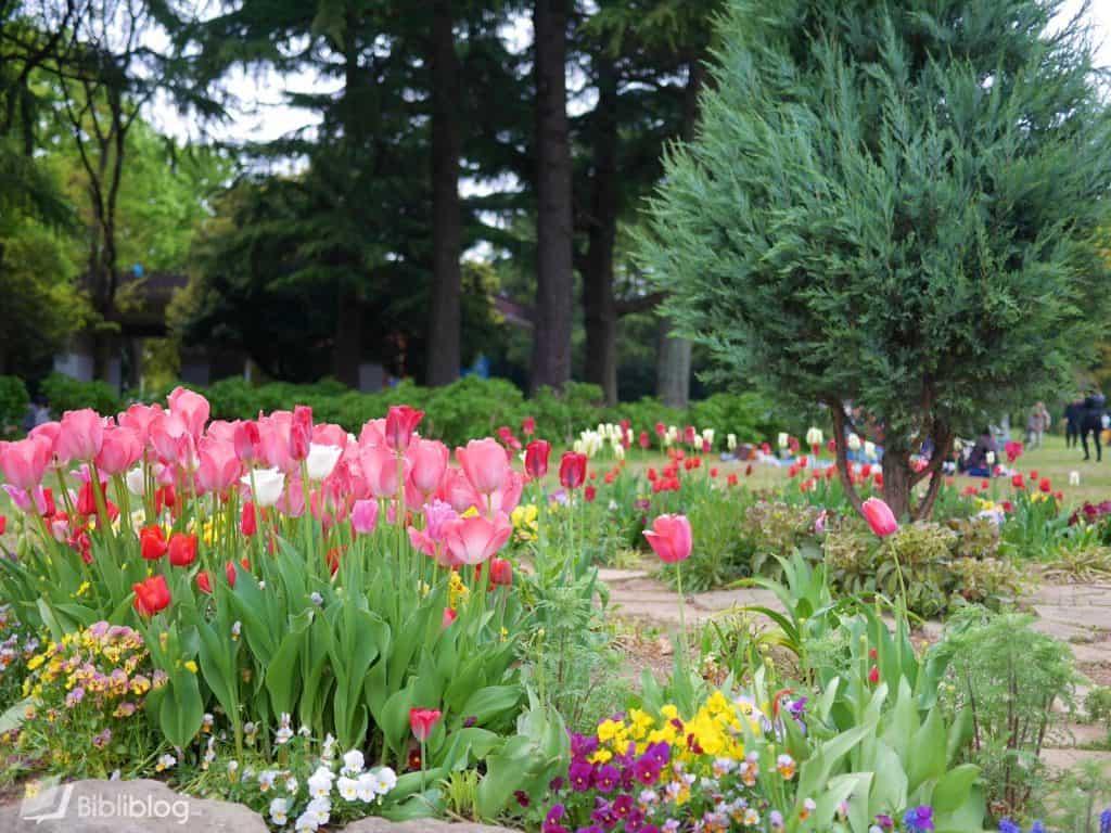 tulips-yoyogi